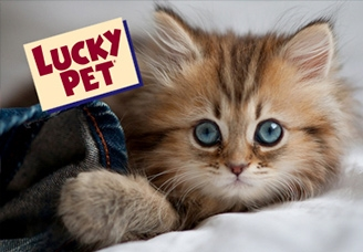 03_LuckyPet-workpage-thumbnail